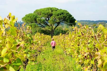 vignes-actus-muscadet-bio-vin